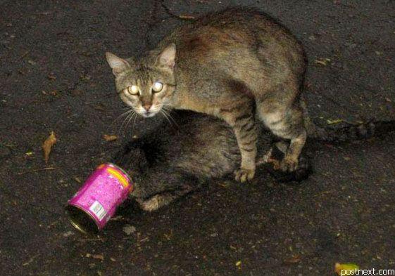 Фото коты ебутся 83229 фотография