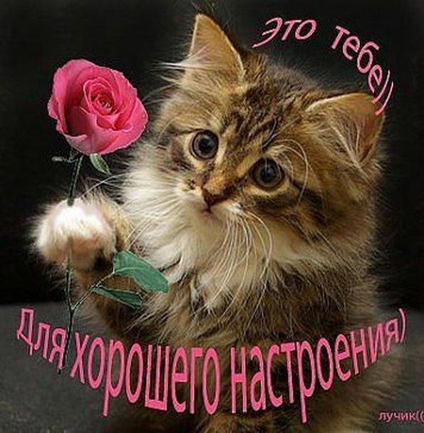 Открытки для любимой девушки с котятами 51
