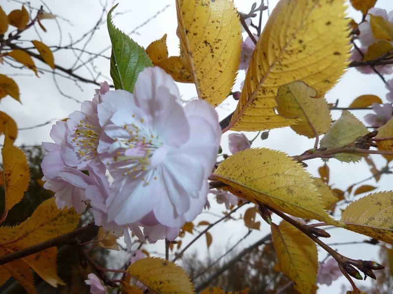 сайт Мультилистинг к чему цветет яблоня осенью приметы одежды: мужская
