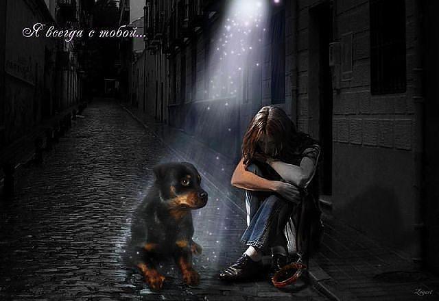 Когда собака умирает куда душа уходит