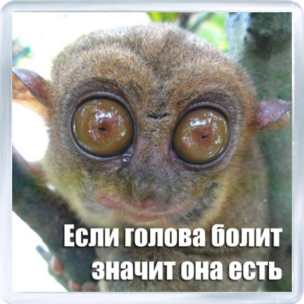http://f4.mylove.ru/T_2om9NjXr16wbe9M.jpg