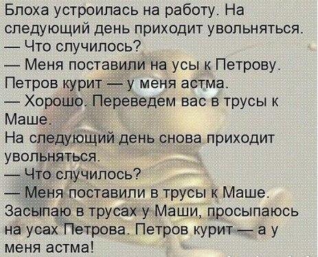 Блоха Анекдот