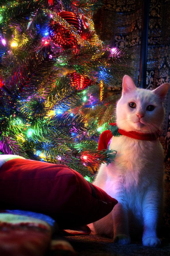 Авы с новым годом с моей фотки