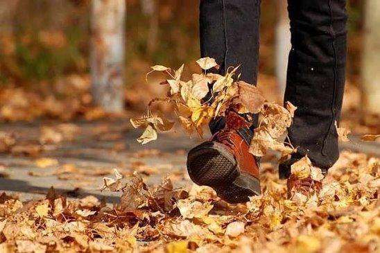 я шелест листьев ловлю