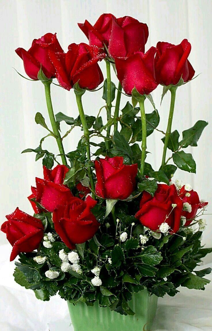 подчеркнула, добрый вечер картинки букет роз всегда рядом