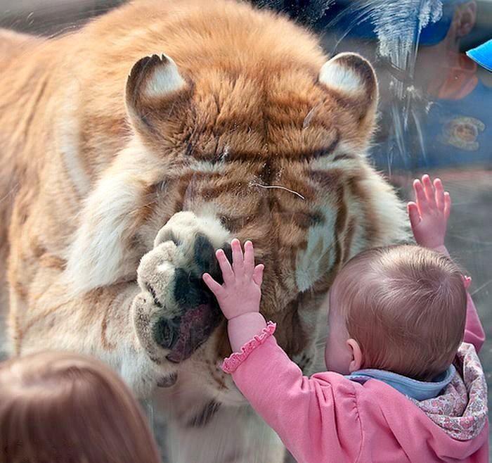 Картинки животные и дети с надписями, открытка уходом