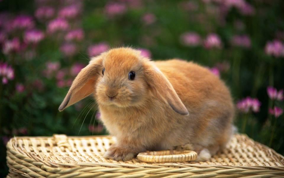 милые кролики фото связи этим открыли