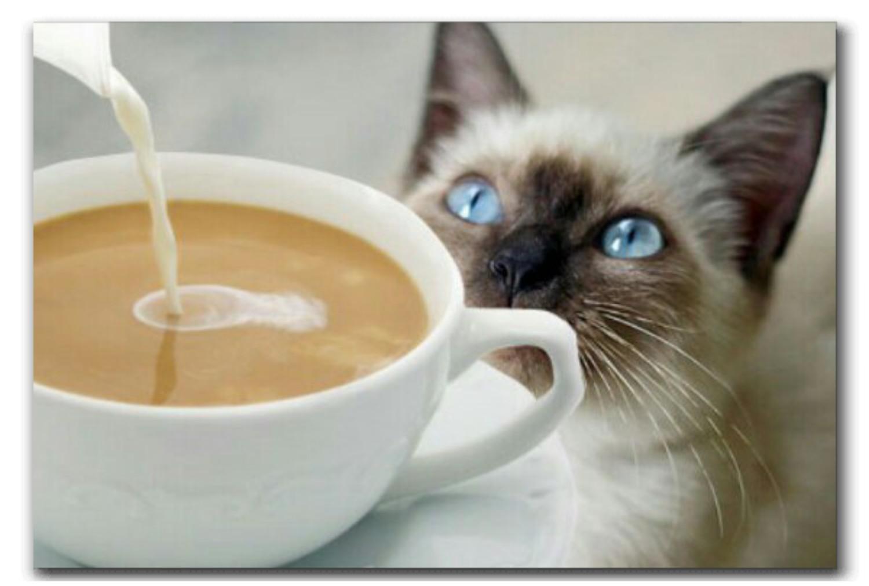 Доброе утро картинки с котятами и кофе и надписями, добрым утром