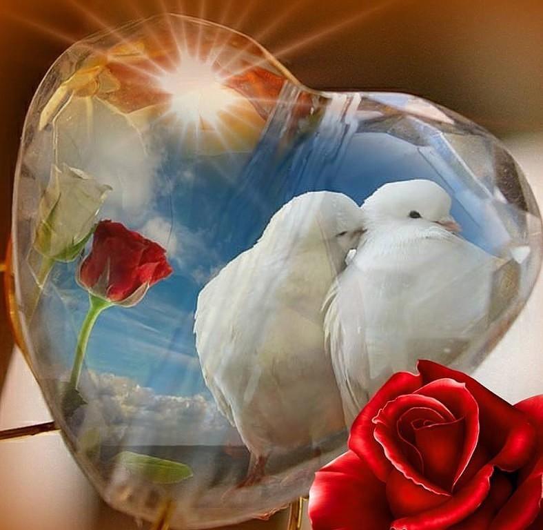 Для открытки, картинки два голубя в сердцах