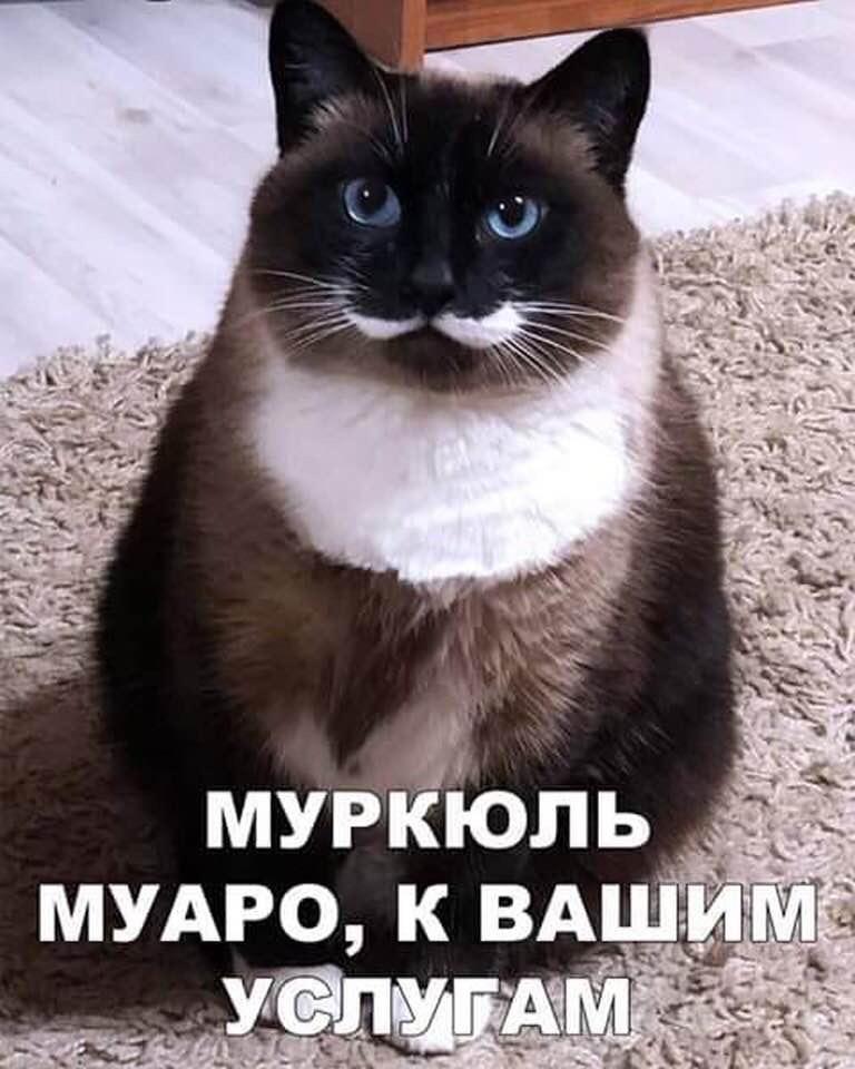 https://f4.mylove.ru/cycN2G1LHI.jpg