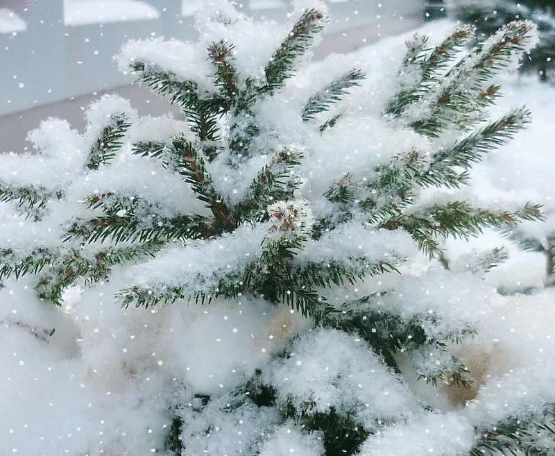 тур снег сделать на фото чтобы без гиф брюнетка