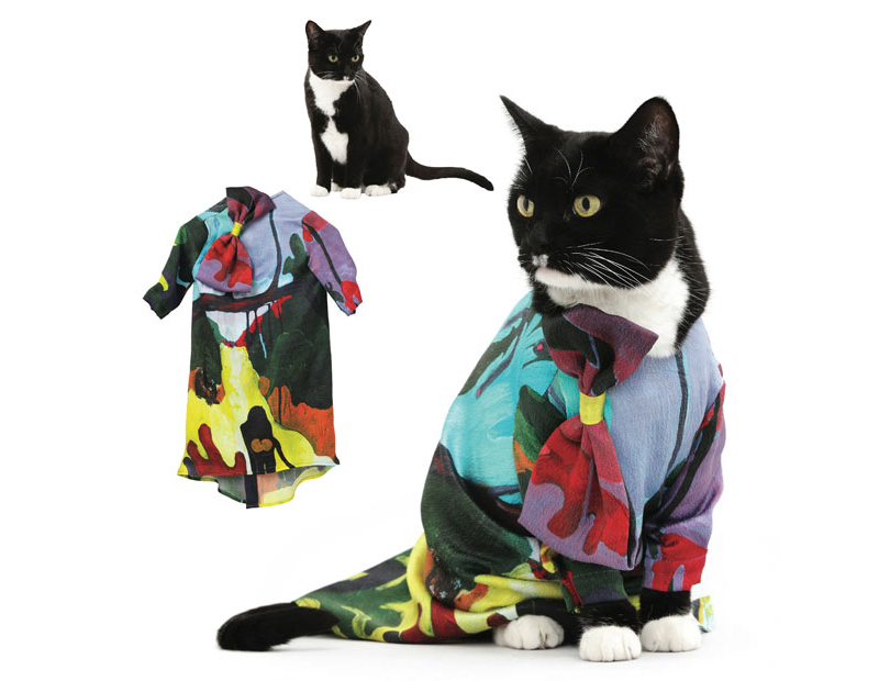 могла картинки кошек на одежде популярное