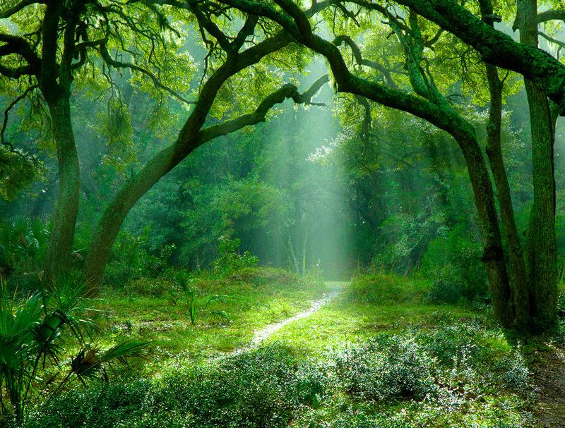 сказочный лес фотографии конце