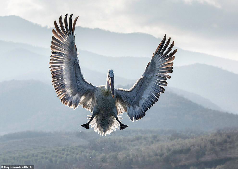 Самая большая птица фото